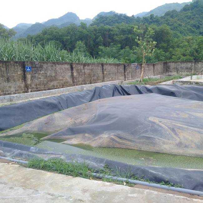Hệ thống xử lý chất thải trong chăn nuôi lợn