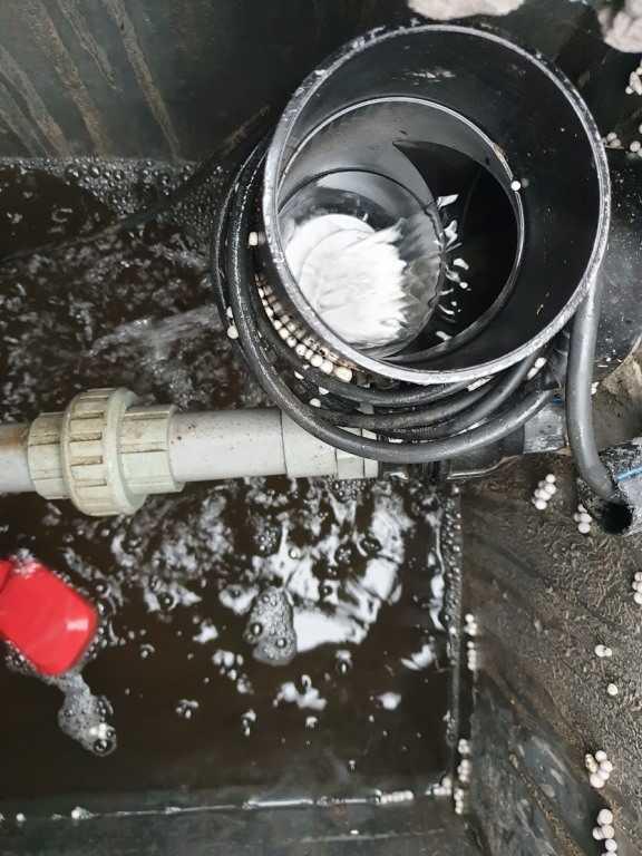 xử lý coliform trong nước thải sinh hoạt