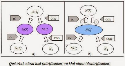 xử lý nitơ trong nước thải